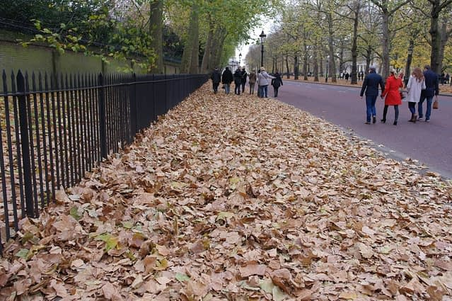 Constitution Hill leaves - London