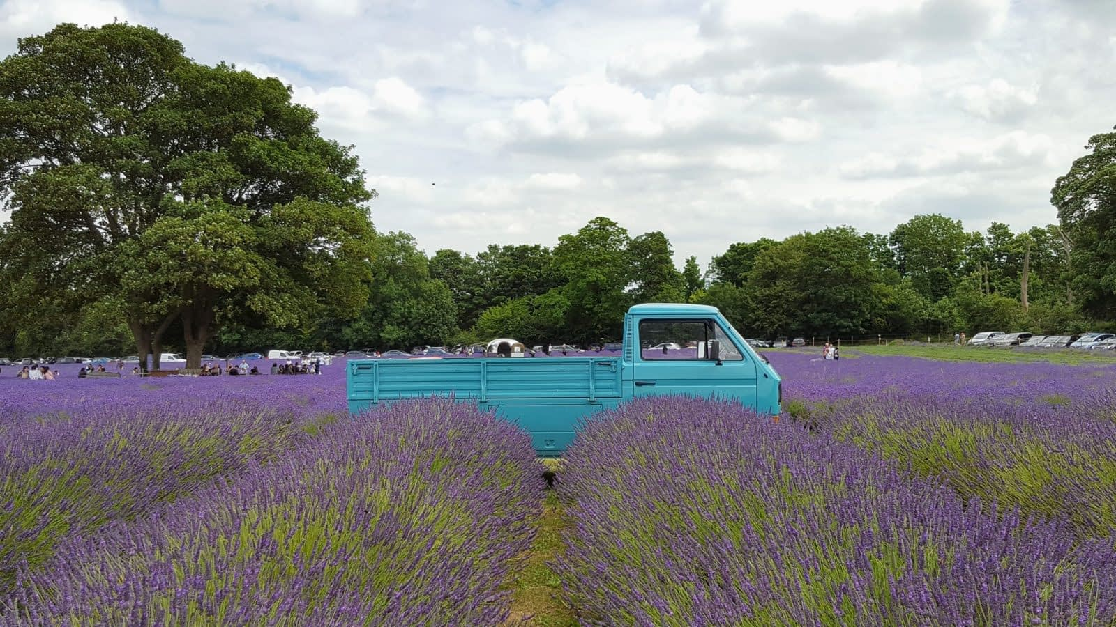 Blue pick up truck at Mayfield Lavender Farm