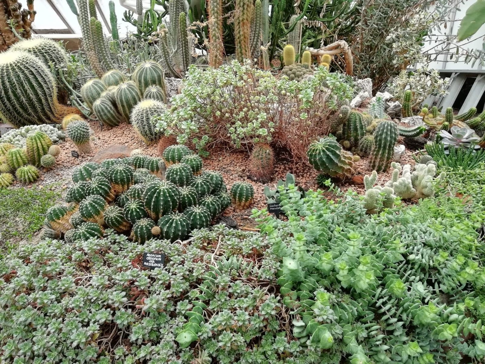 Visiting Barbican Conservatory: Photo Gallery 9