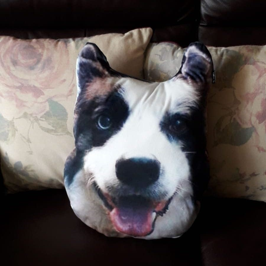 Dogsy Review - I Turned My Dog's Face Into a Personalised Pillow 4