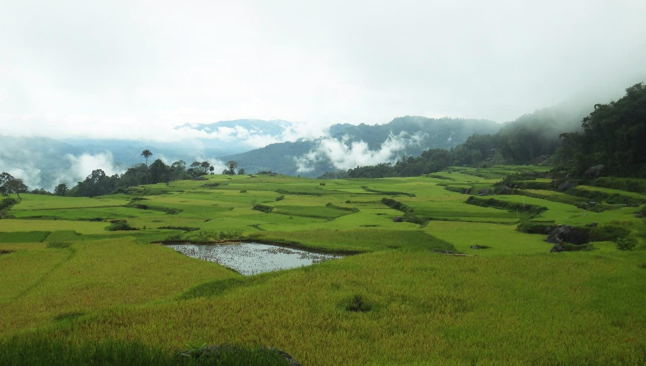 Rice fields. Central Sulawesi Indonesia