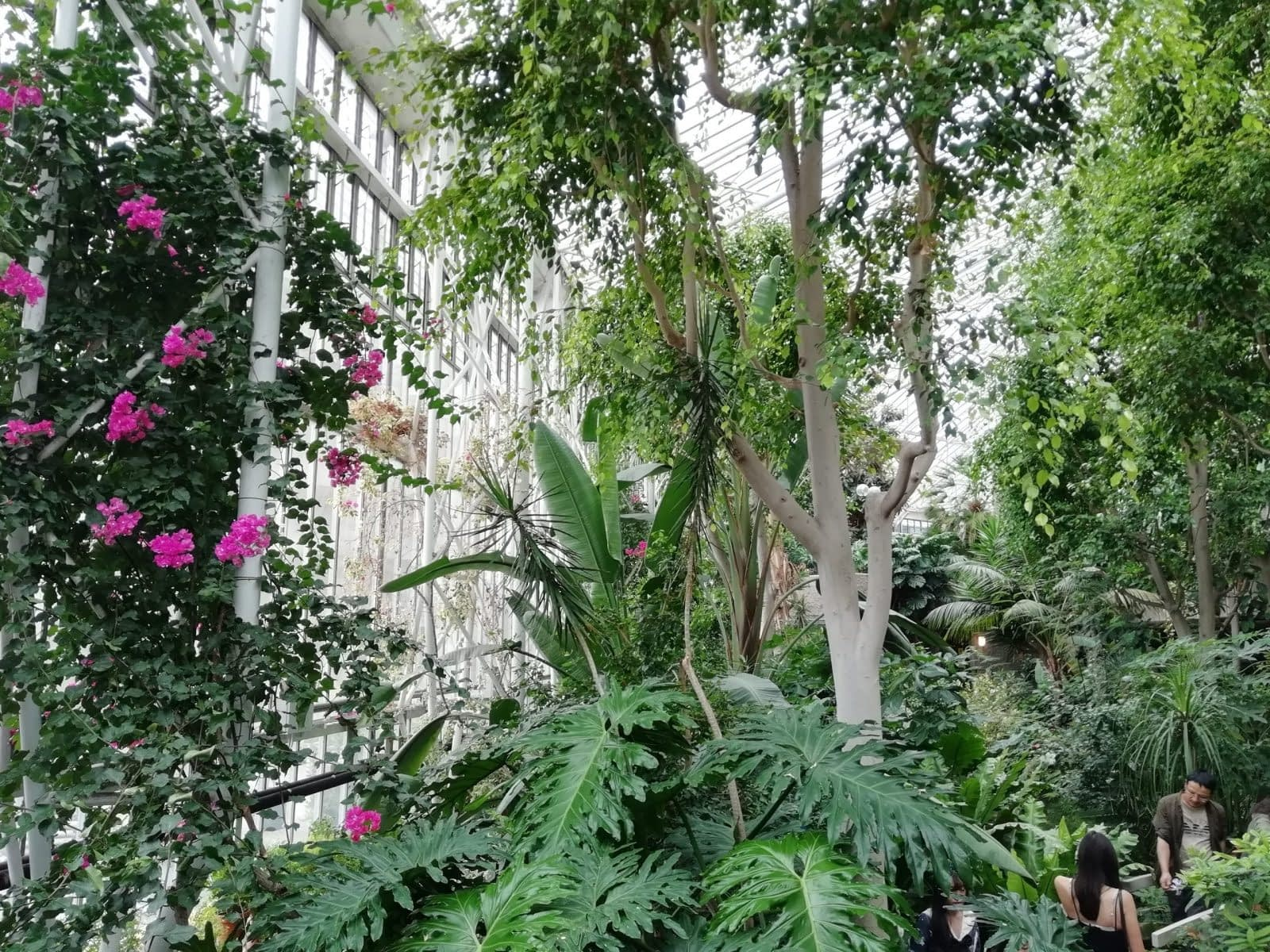 Visiting Barbican Conservatory: Photo Gallery 4